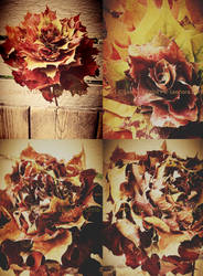 Autumn Rose by LeonoraChris
