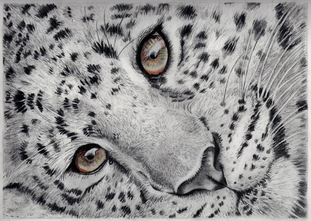 Cheetah drawing by Larry-the-cucumber on DeviantArt