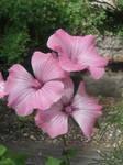 Flower Stock 2