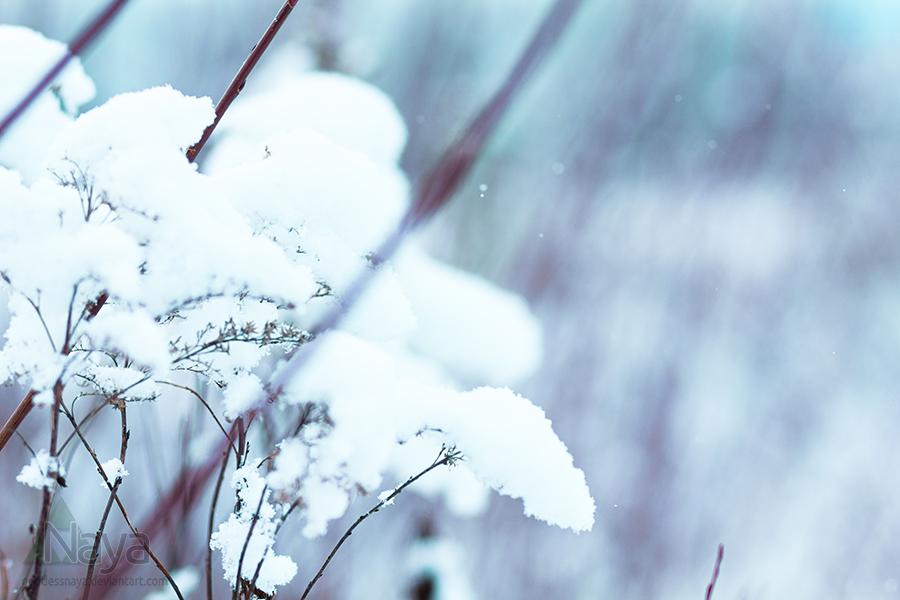 Wintertime by goddessnaya
