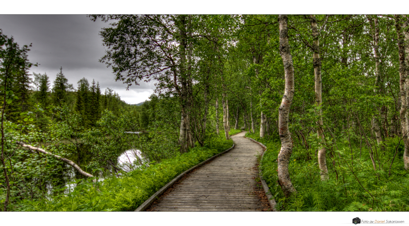 The Path II by kongdaniel