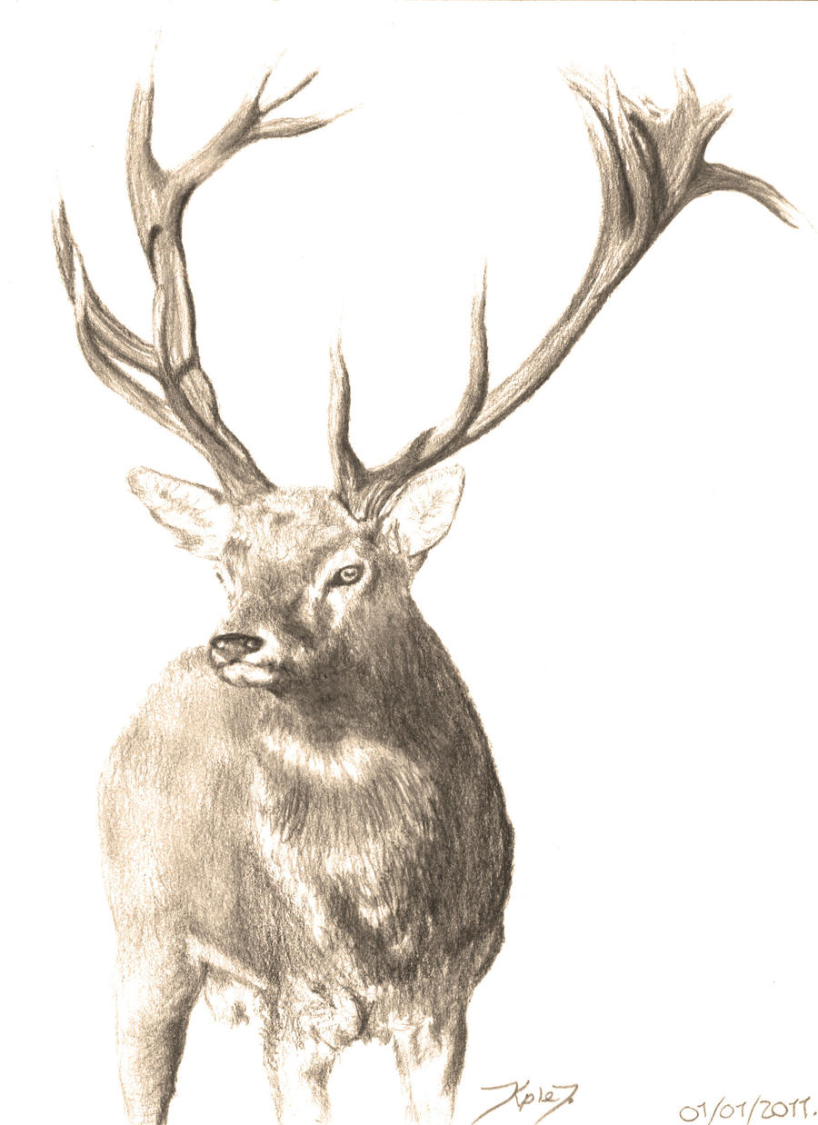 how to draw a realistic deer