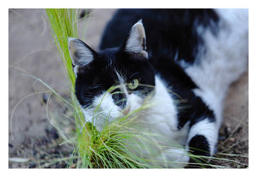 One eyed Suzy in the grass