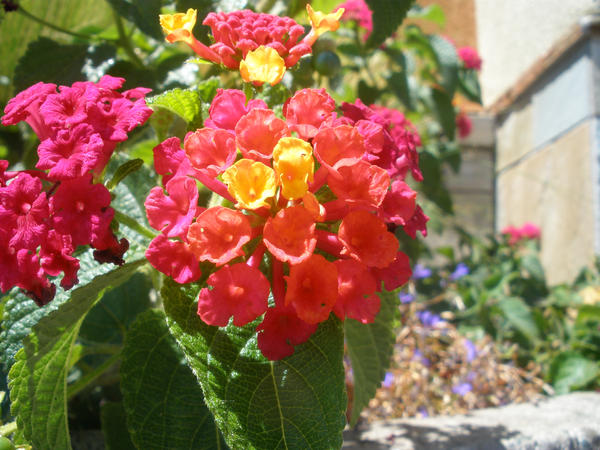 Flowers with different colors by altonwiththebchs on for What makes flowers different colors