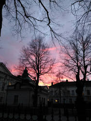 Purple pink sky and trees