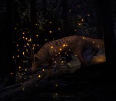 COM: fireflies