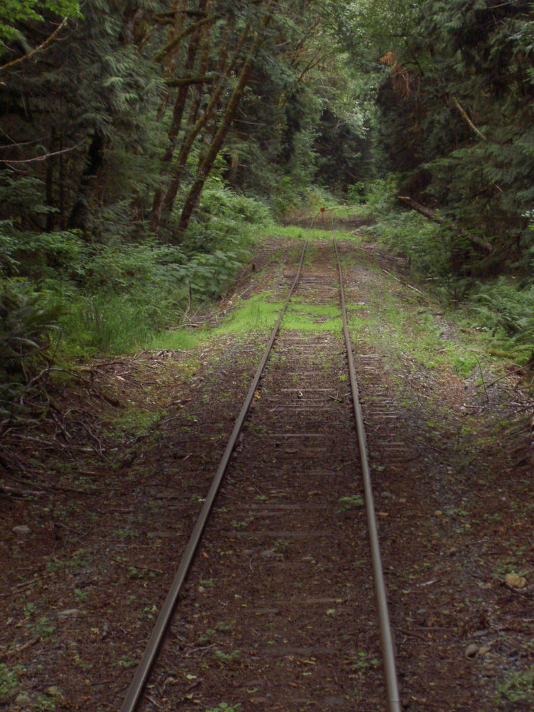 Portrait of Tracks in the Woods by TomRedlion