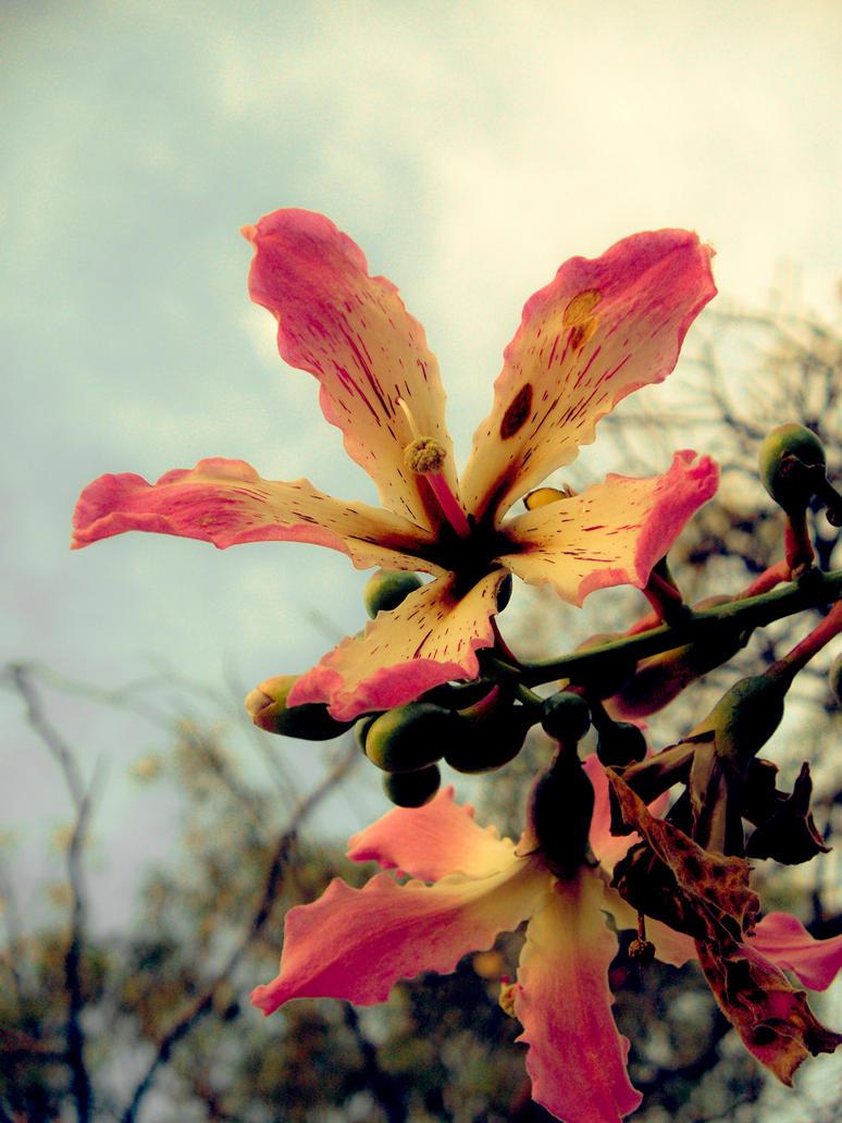 Flor del palo borracho by MultimediaNaranja