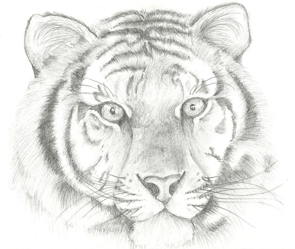 Tiger face by HUNDraGirl on DeviantArt
