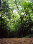 Forest-stock 2
