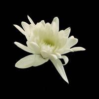 Flower-stock 2