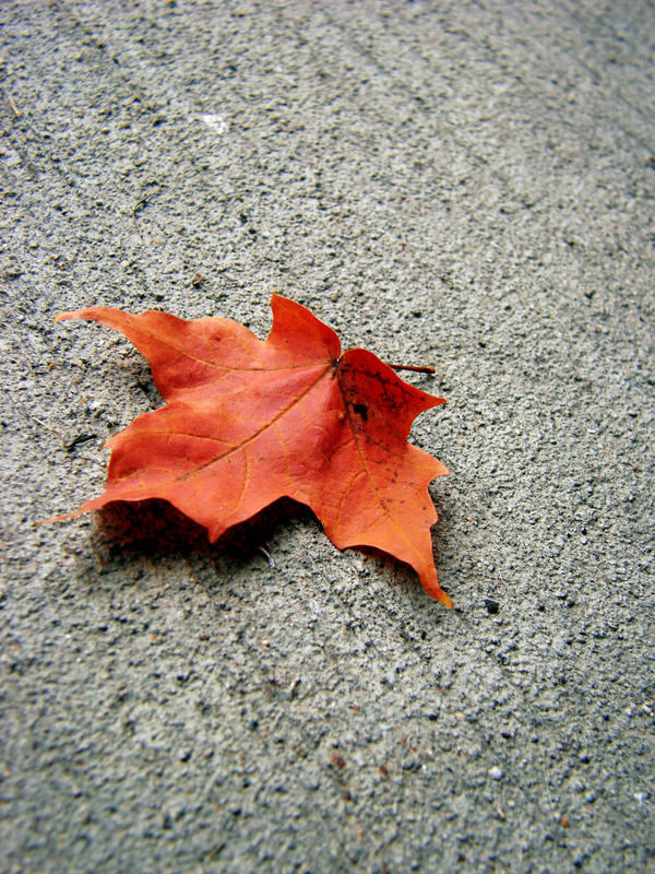 Leaf-stock by AJK-Original-Stock