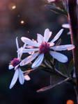 Flower-stock 4