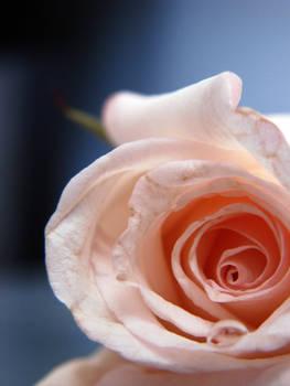 Flower-stock 5