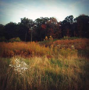 Landscape-stock 11
