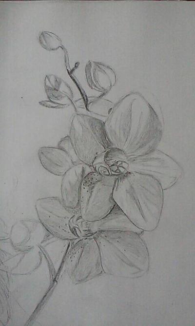 Flowers - Weekly Challenge #8 by katondragon