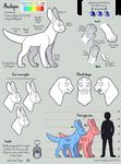Avilope Anatomy Guide