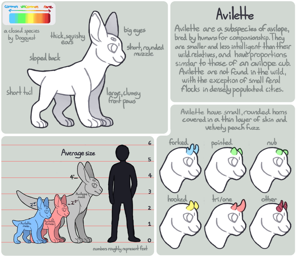 Avilette Anatomy Guide by Dogquest on DeviantArt