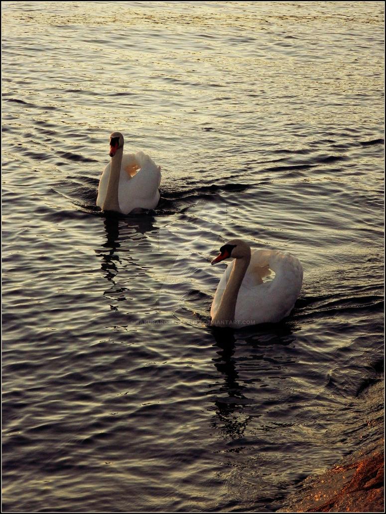 Swan Lake by SakuraRosencreutz