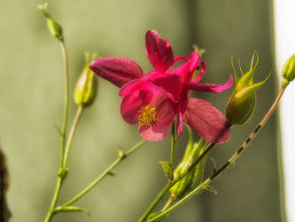 Flowery Elegance
