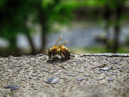 A lonely bee seeming insignificant, acting crucial