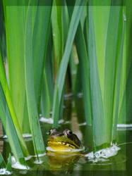 Hiding in the Irises