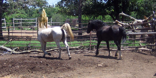 blonde centaur mare and stallion by cornishcentaur