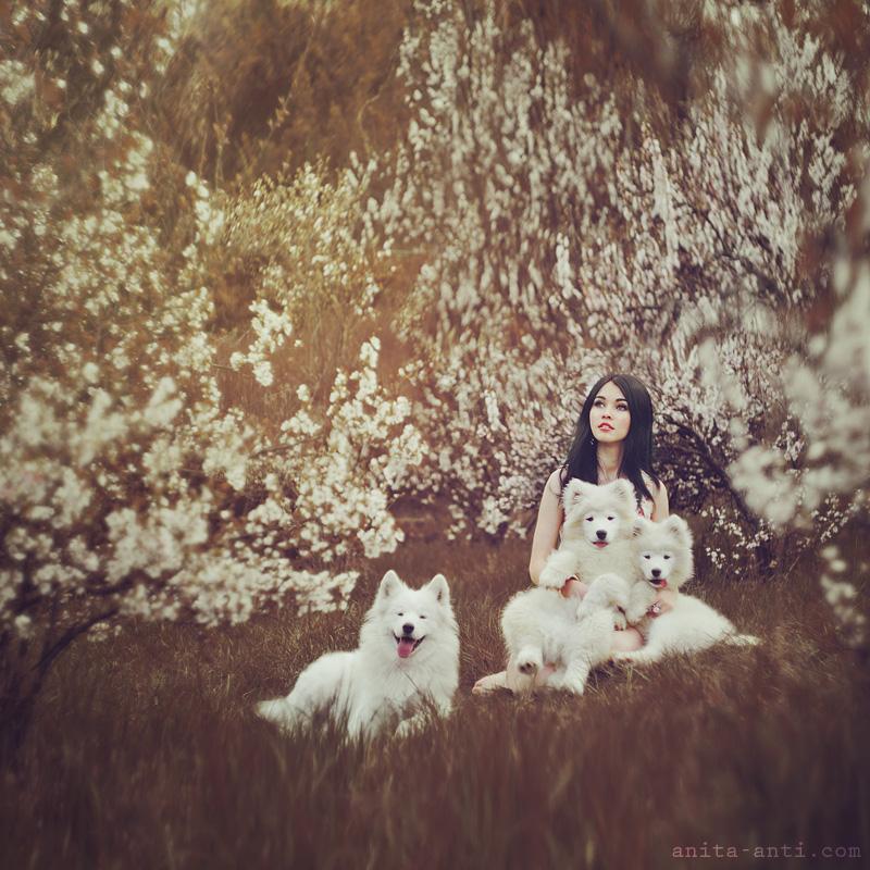 Samoyeds by AnitaAnti