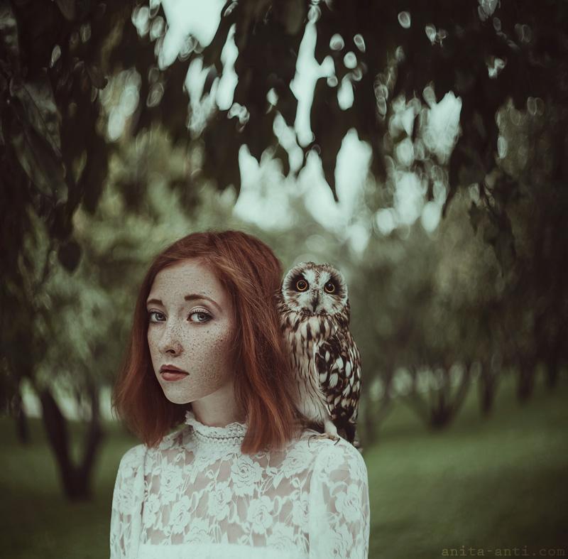 Owl by AnitaAnti