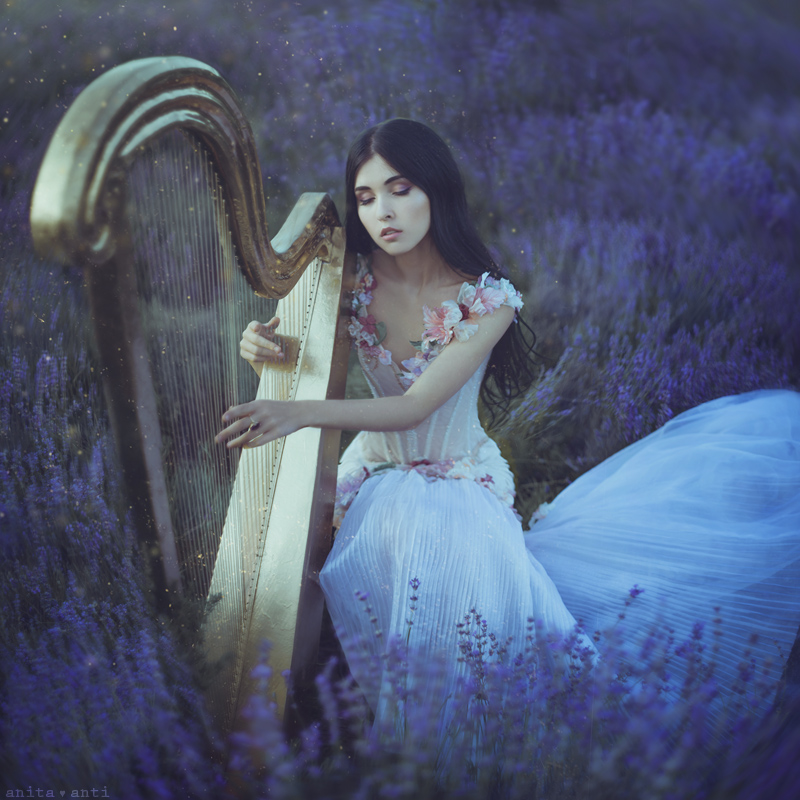 Lavender nocturne by AnitaAnti