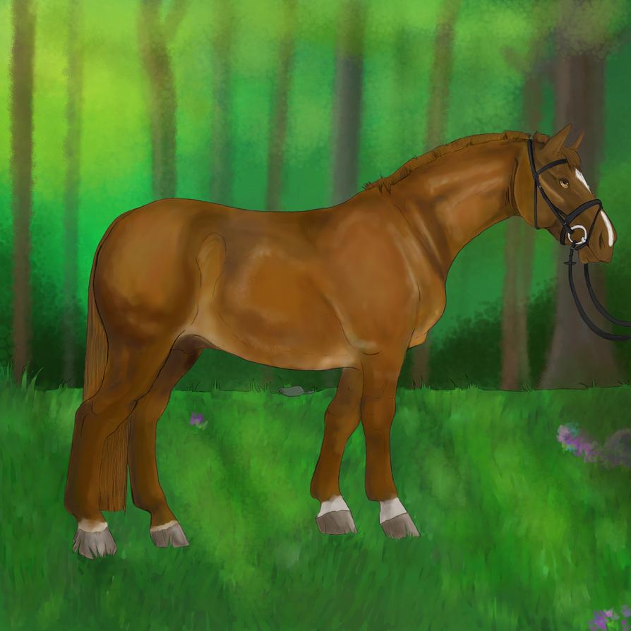 Irish Draught stallion by Kuroibaka