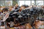 Mushroom Birth