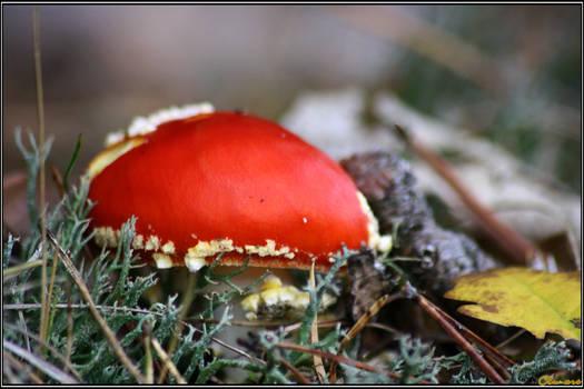 Autumn Picks: Last Fly of the Year