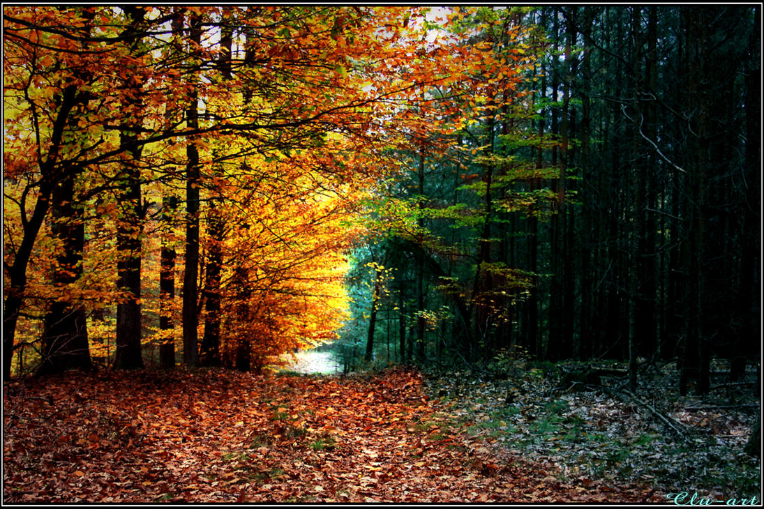 Strict Autumnal Separation by Clu-art