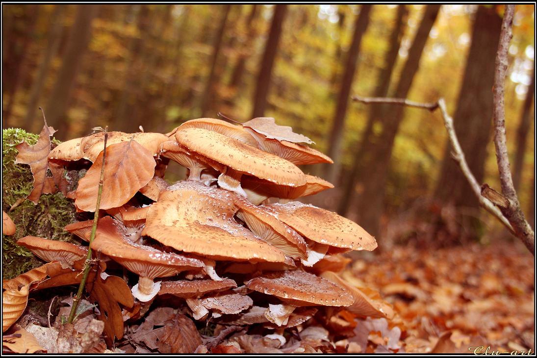 Mushroom Flakes by Clu-art