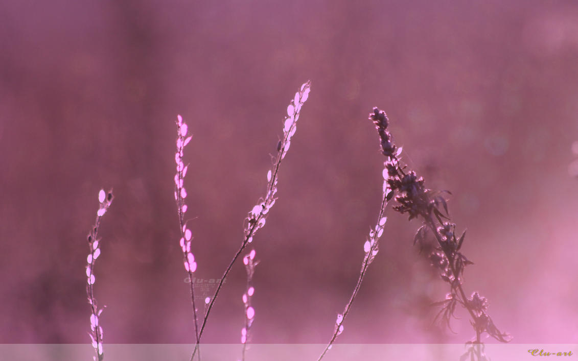 Morning Mist on the Meadow Wallpaper by Clu-art
