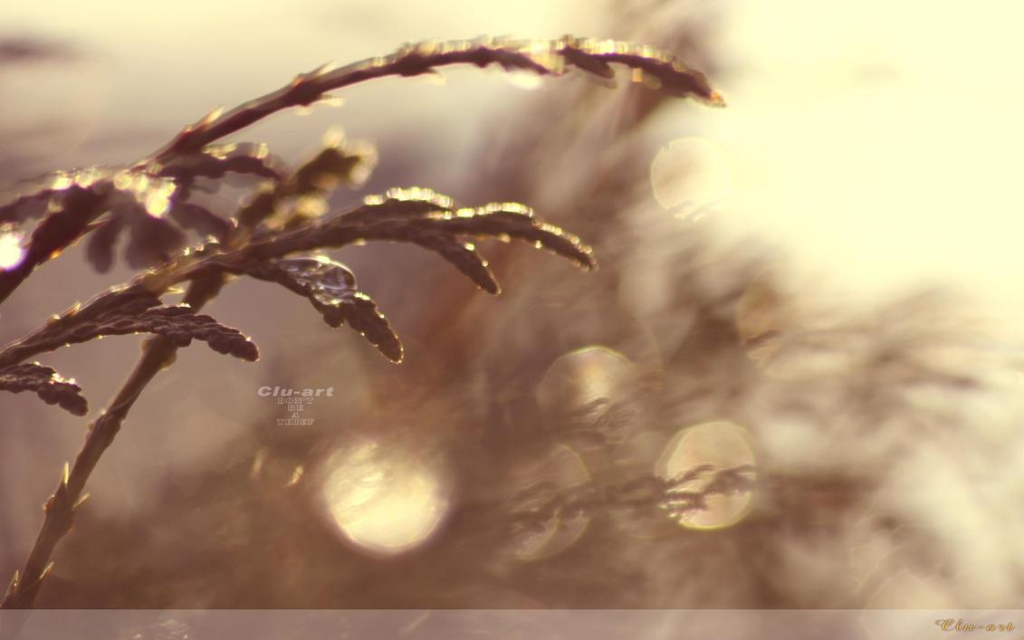 morning dew drops wallpaperclu-art on deviantart