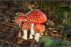 Autumn Picks: Fly Agarics by Clu-art