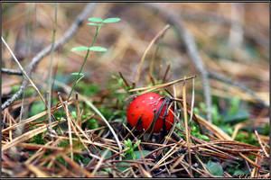 Autumn Picks: Red Button