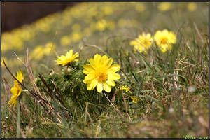 Spring Moments 19 by Clu-art