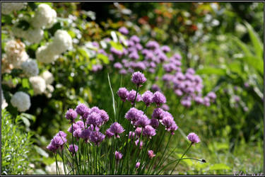 Spring Moments 12 by Clu-art