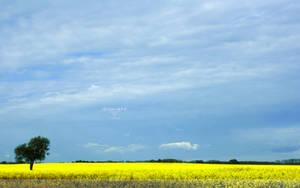 Spring Fields Wallpaper by Clu-art