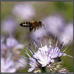 Beefriended