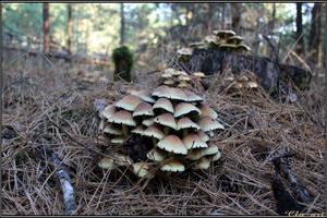 Autumn Picks: Hypholoma capnoides by Clu-art