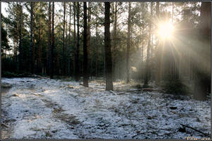 Sunny Winter Path by Clu-art