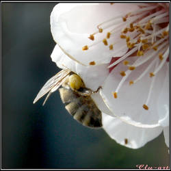 Dipping Bee