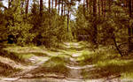 Pines in June Wallpaper by Clu-art