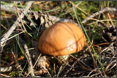 Summer Find: Pored Mushroom