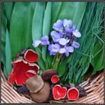 Spring Encounter: Edible Mix by Clu-art