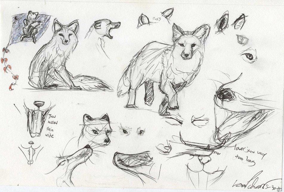 Red Fox Anatomy Sketches By Sablewood On Deviantart